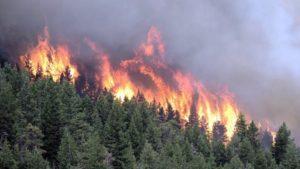 Люди задыхаются — пожары в Сибири.